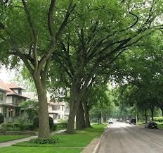 Oak-Tree-Lined-Street